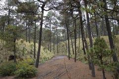 Wald von Mexiko mit einzigartigen Spuren und Bäumen Lizenzfreie Stockbilder