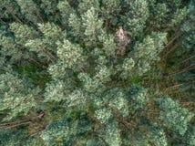 Wald von oben Stock Image
