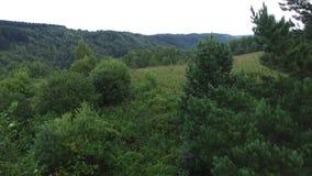 Wald von Osteuropa stock video footage