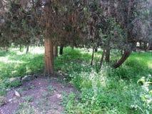 Wald von ` Rosh ha ayin Stockbild