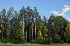 Wald von Russland stockfoto