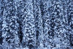 Wald von schneebedeckten Bäumen Lizenzfreies Stockbild