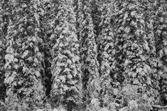 Wald von schneebedeckten Bäumen Lizenzfreies Stockfoto