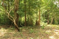 Wald von Thailand Lizenzfreie Stockfotografie