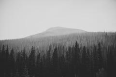 Wald vor Bergen Lizenzfreie Stockbilder
