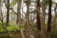 Wald vor den Bäumen Stockfotografie