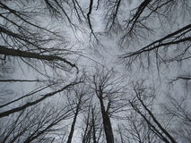 Wald, Vorfrühling, Tannenzapfen Lizenzfreie Stockfotos
