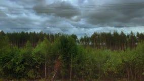 Wald während des Bewegens in wolkiges Wetter stock video footage