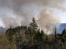 Wald, Waldlandschaft auf Feuer, Italien Raucht Wogen über brennenden Bäumen, Waldland lizenzfreies stockbild