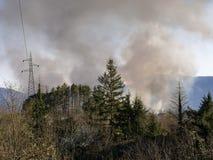 Wald, Waldlandschaft auf Feuer, Italien Raucht Wogen über brennenden Bäumen, Waldland lizenzfreie stockfotos