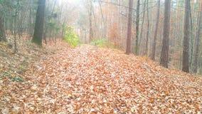 Wald Waldweg Herbst Stockbild