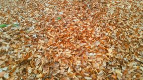 Wald Waldweg Herbst stockbilder