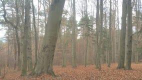 Wald Waldweg Herbst. Austria Weg royalty free stock photo