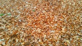 Wald Waldweg Herbst