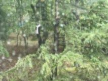 Wald warf ein regnendes Glas stockfoto