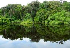 Wald widergespiegelt in einer Lagune auf dem Amazonas Stockbilder