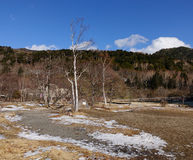 Wald am Winter in Nagano, Japan Lizenzfreie Stockfotos