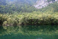 Wald wird im Fluss reflektiert Lizenzfreie Stockfotografie