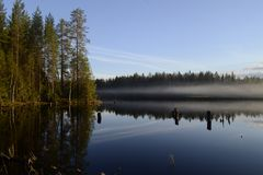 Wald wird im Wasser reflektiert stockfotografie
