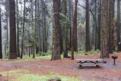 Wald in Yosemite-Tal stockbild