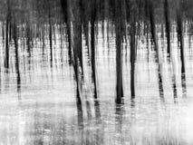 Waldabstrakter Hintergrund Lizenzfreie Stockfotos