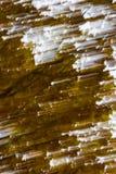Waldabstraktion Langes Belichtungsfoto des herbstlichen Waldes Stockbilder