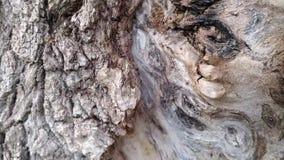 Waldameisen laufen gelassen entlang die Barke eines Baums stock video footage