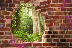 Waldansicht durch ein Loch in der Wand Lizenzfreie Stockfotos