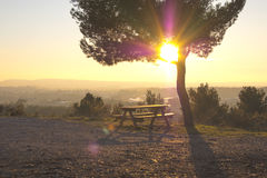 Waldansicht in Provence Frankreich, Sonnenuntergang Stockbild