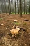 Waldausschnitt Stockbild