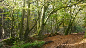 Waldbäume im Herbst Stockbild