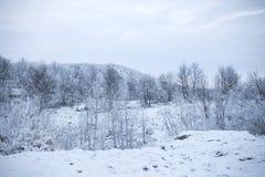 Waldberg und -park im Winter stockfotografie