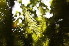 Waldblätter Lizenzfreie Stockfotos