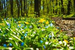 Waldblumen an einem sonnigen Frühlingstag stockbilder