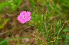 Waldblumen im Gras Lizenzfreie Stockfotos