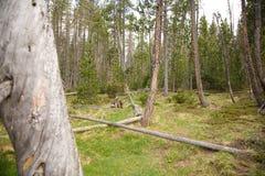 Waldboden Stockbild