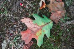 Waldboden im Herbst Stockfotos