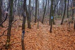 Waldboden mit Teppich ausgelegt mit Blättern stockfotos