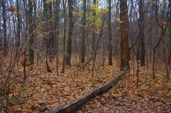 Waldboden mit Teppich ausgelegt mit Blättern stockbilder