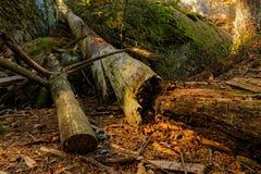 Waldboden tief im Holz im Bayern lizenzfreies stockbild