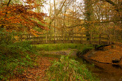 Waldbrücke im Herbst Stockfoto