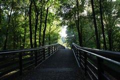 Waldbrücke im Sommer Stockfotografie