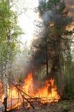 Waldbrand stockfotografie