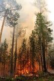 Waldbrand lizenzfreies stockfoto