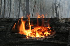 Waldbrand Lizenzfreie Stockbilder