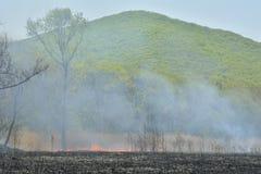 Waldbrand 15 Lizenzfreies Stockfoto