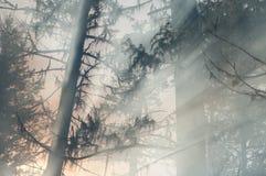Waldbrand Stockfoto