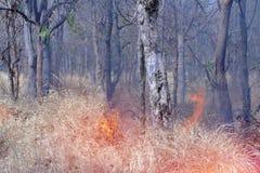 Waldbrand in der Dürre von Thailand Lizenzfreies Stockbild