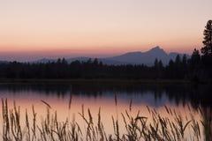 Waldbrand-Sonnenuntergang stockbilder