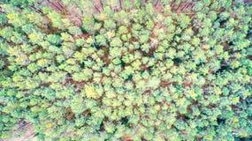 Walddraufsicht Stockbilder